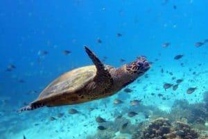 Les spots de snorkeling à Nosy Be