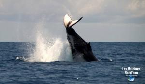 jette de caudale de baleines à bosses à nosy be